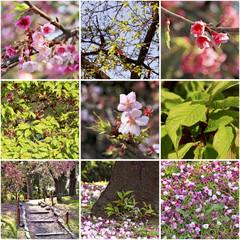 Sakura blossoms in the Japanese garden. Spring collage.