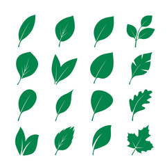 Set of Green Leafs. Vector Illustration.