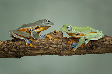 Close up of frog sitting on branch