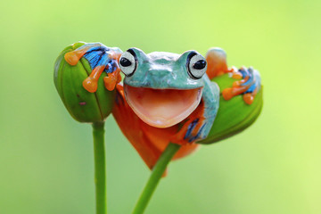 Close up of frog sitting on bud