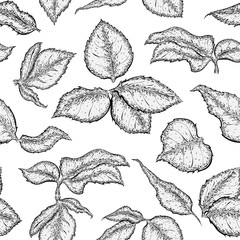 Hand drawn seamless pattern with foliage of rose. Monochrome leaf. Detailed sketch of leaves isolated on white background.  Black and white pencil or ink drawing