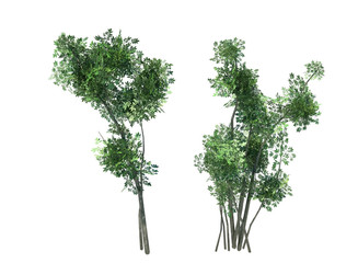 the bushes branches of trees on a white background 3D render