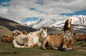 Cavalli si rilassano sul prato prendendo il sole