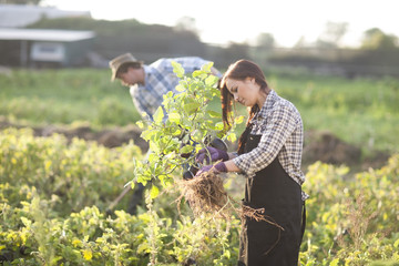 Young woman and man working on field