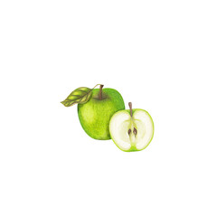 Isolated hand drawn apples on white background