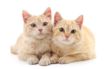 Brown kittens.