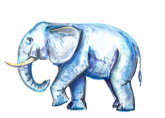 hand painted watercolor elephant. watercolor illustration