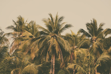 Silhouette palm tree in vintage filter background