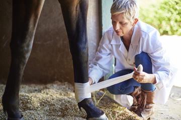 Veterinarian bandaging leg of a horse