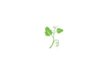 grape leaf vector illustration isolated on white background logo Fototapete