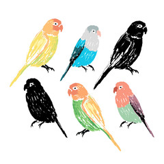 Set of the colorful hand drawn parrots