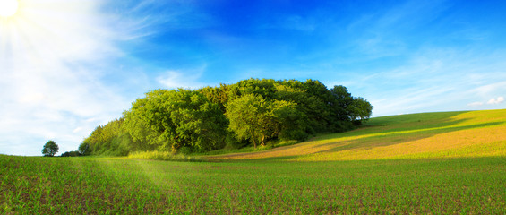 Summer landscape with green grass and sun.