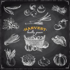 Vector hand drawn sketch Harvest set.