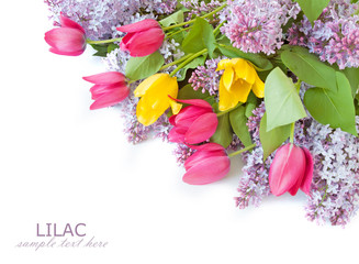 Lilac and tulips flowers isolated on white background with sample text