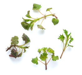 Nettle leaves on a white background
