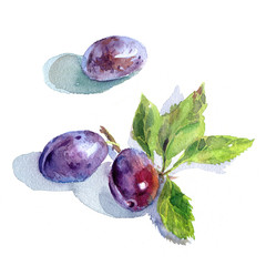Plums with green leaves