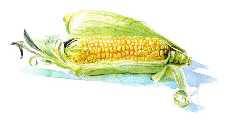 Watercolour sketch of a yellow corn with green leaves