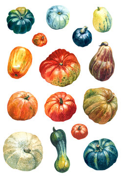 Set of assorted pumpkins painted with watercolours