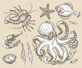 Hand drawn sketch set sea animals, seafood. Vector illustration