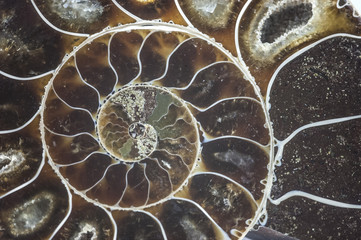 Printed kitchen splashbacks Textures nautilus ammonite fossil shell macro texture