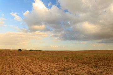 Tranquil wide field under white clouds sunrise