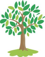 magic olive tree