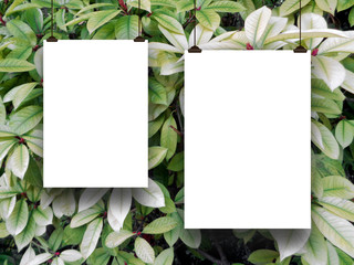 Close-up of two blank frames hanged by clips against green and grey foliage background