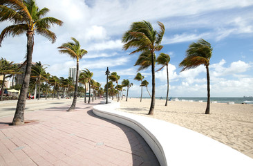 Palm trees blowing on a sunny day on Fort Lauderdale Beach, Florida, USA.