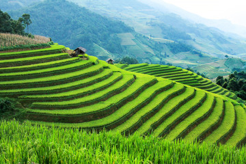 Autocollant pour porte Les champs de riz Rice fields on terraced in rainny season at Mu Cang Chai, Yen Bai, Vietnam. Rice fields prepare for transplant at Northwest Vietnam
