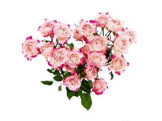 Flower pink roses in heart