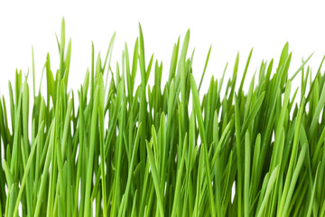 Green grass. Isolated