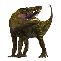 Batrachotomus on White - Batrachotomus was a carnivorous archosaur predator that lived in Germany during the Triassic Period.