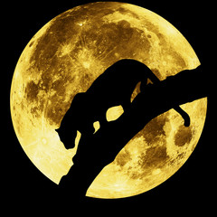 silhouette of a panther on a background of the moon