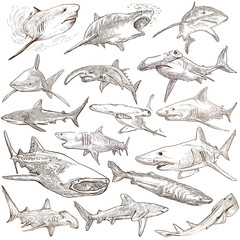 Sharks - An hand drawn pack. Freehand sketching, originals.