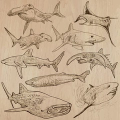 Sharks - An hand drawn vector pack