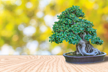 Bonsai tree in a ceramic pot on a wooden floor and blurred bokeh