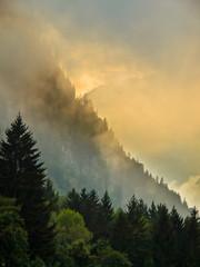 Wall Mural - Sunrise over Mountain ridge with pine trees
