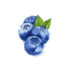 blueberries with leaves isolated. Watercolor