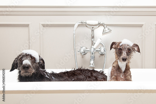 dog and suds - 1024×683