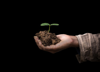 Senior man holding young spring plant in hands. Ecology concept