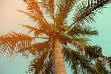 Coconut palm tree sky blue sunny summer vintage background