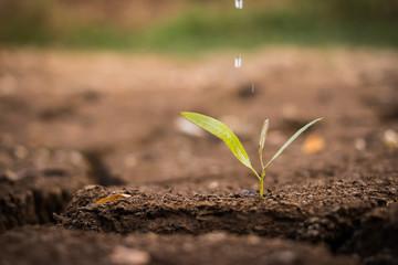 watering the ground barren
