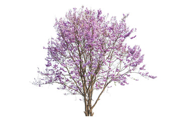 pink flowers tree isolated on white background