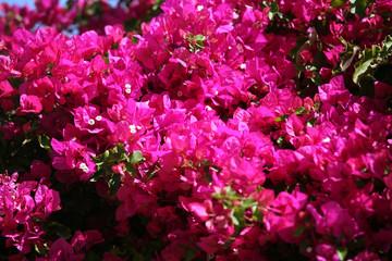 Spring in Egypt