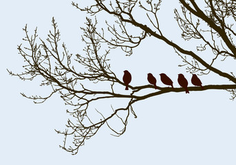 birds on the tree in the spring