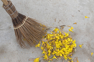 Old styled broom made of coconut leaf stalks sweeping yellow flowers fallen from Caribbean trumpet tree