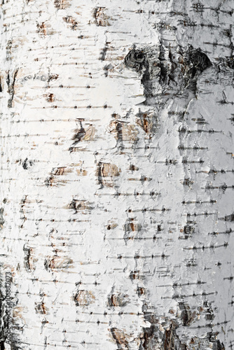 Wall mural birch bark background