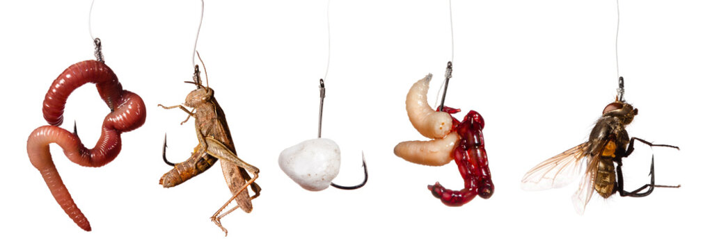 set of fishing baits on the hook isolated on white background