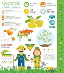 Gardening work, farming infographic. Pear. Graphic template. Fla