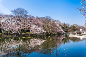 東京 井の頭公園